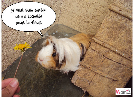 Daisy , lolcats réalisé sur Wamiz