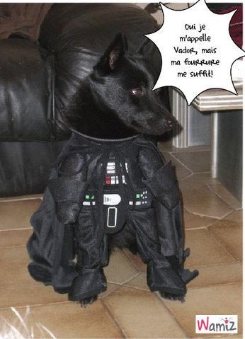 Dark Dog, lolcats réalisé sur Wamiz