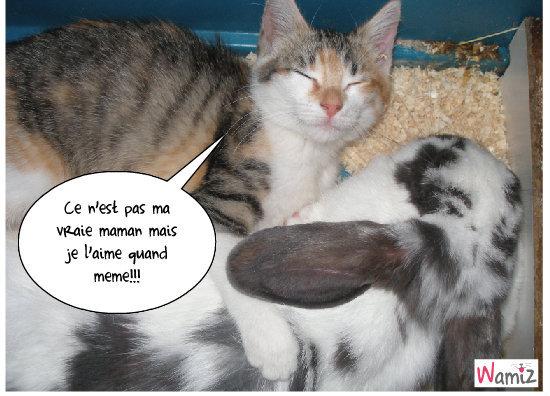 Amour entre un chat et un lapin!!!!, lolcats réalisé sur Wamiz