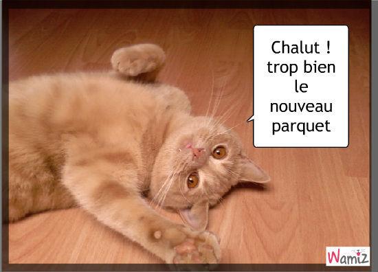 Chalut !, lolcats réalisé sur Wamiz