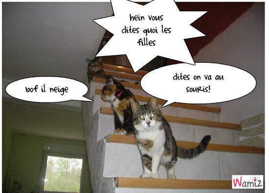 mes trois chats, lolcats réalisé sur Wamiz
