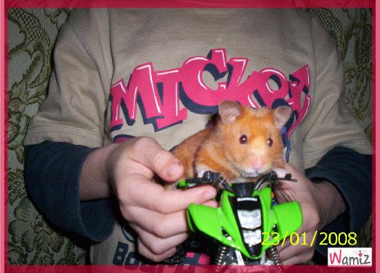 Minnie fait du quad!!!!, lolcats réalisé sur Wamiz