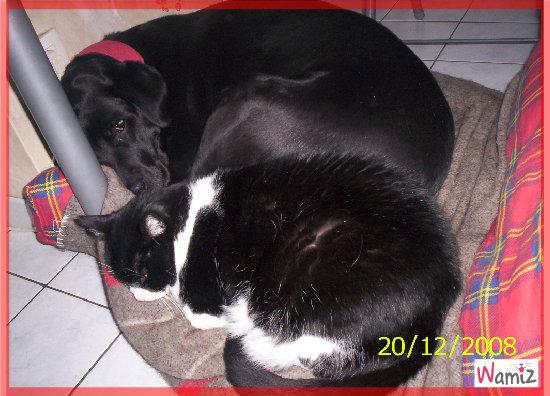 nous, on s'aime comme chat et chienne, lolcats réalisé sur Wamiz