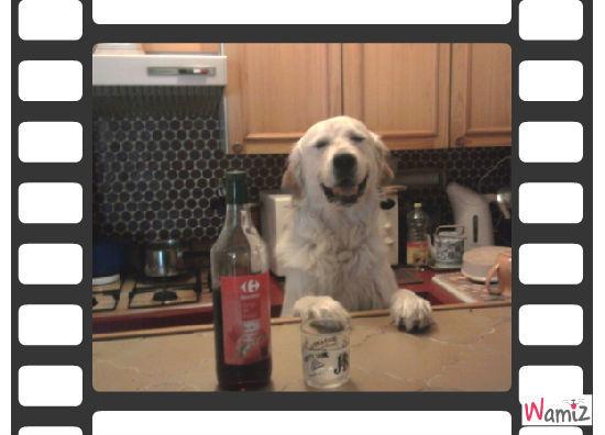 erko  chien barman, lolcats réalisé sur Wamiz
