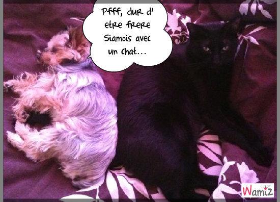 Murphy & son frère Félix !!, lolcats réalisé sur Wamiz