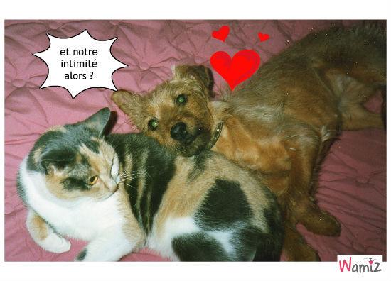 amour-amour, lolcats réalisé sur Wamiz
