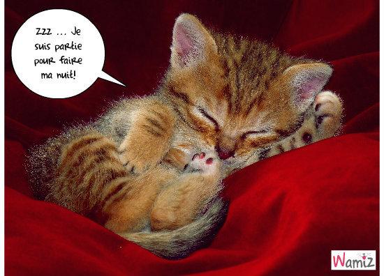 mon chaton!, lolcats réalisé sur Wamiz