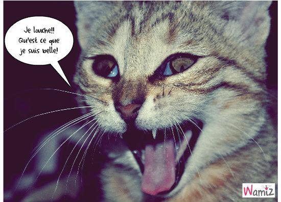Mon chaton, grosse fatigue!, lolcats réalisé sur Wamiz