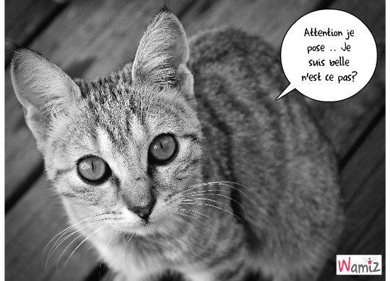 mon chaton qui pose!, lolcats réalisé sur Wamiz