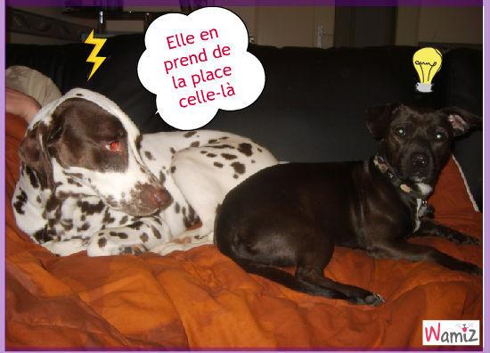 Abby et Maddy, lolcats réalisé sur Wamiz