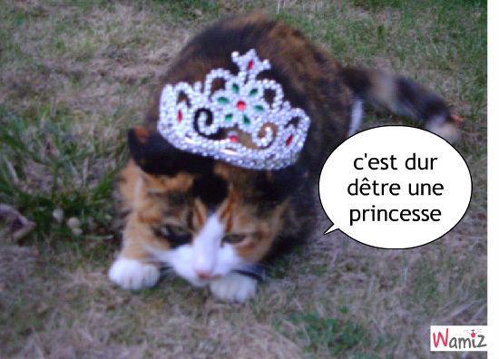 trop dur dêtre une princesse, lolcats réalisé sur Wamiz