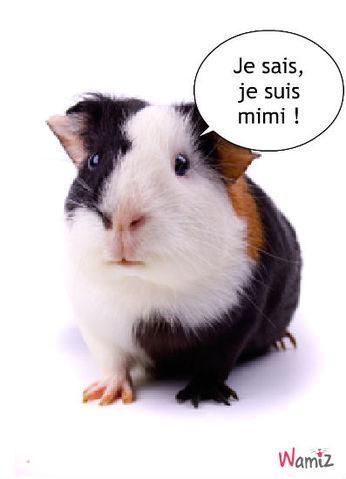 cochon d'inde mimi, lolcats réalisé sur Wamiz
