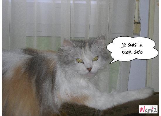 misss stars 2010, lolcats réalisé sur Wamiz