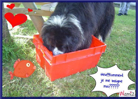 Baloo veut se baigner!!!, lolcats réalisé sur Wamiz
