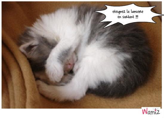Chat dort...., lolcats réalisé sur Wamiz