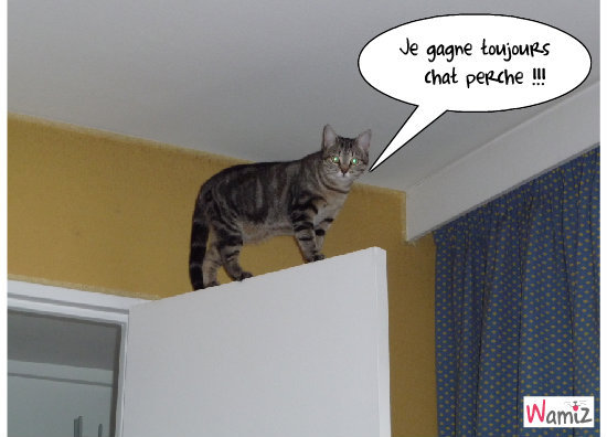 Sukki chat perché, lolcats réalisé sur Wamiz