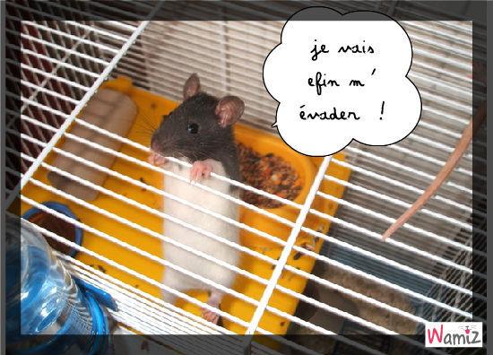 l' hamster s' évade, lolcats réalisé sur Wamiz