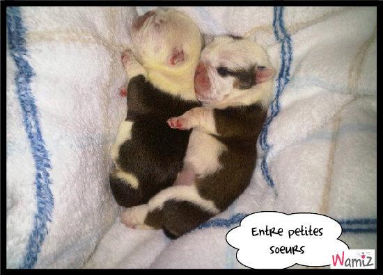 Bébés de Choupette!, lolcats réalisé sur Wamiz