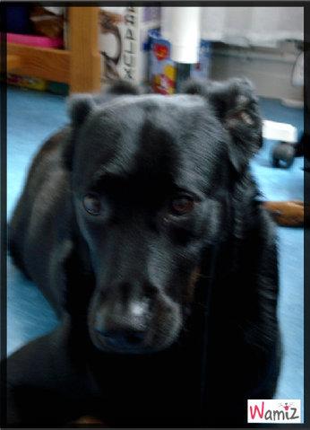 Happy dog, caractère bien trempée, beauceronne dans l'âme, notre fidèle chienne, lolcats réalisé sur Wamiz