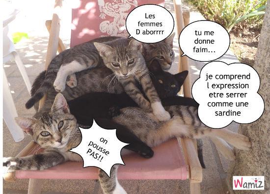 Lady,M.J,Mozart et mon petit cherii BAGHERA, lolcats réalisé sur Wamiz
