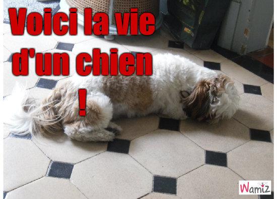La vie d'un chien , lolcats réalisé sur Wamiz