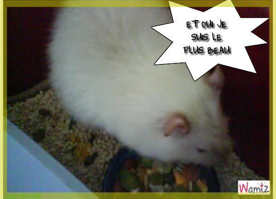 MON RAT, lolcats réalisé sur Wamiz
