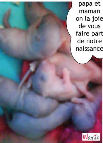 mes bébé rat, lolcats réalisé sur Wamiz
