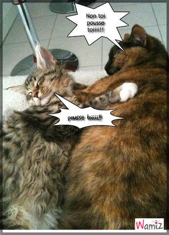 chat m'énerve!!, lolcats réalisé sur Wamiz