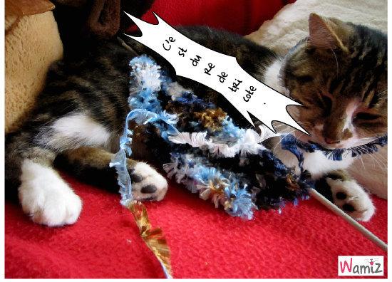 c'est jenial  de  tricote., lolcats réalisé sur Wamiz