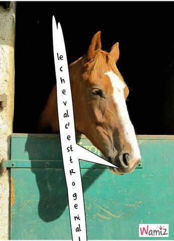 le  cheval  c'est  tro  genial!, lolcats réalisé sur Wamiz