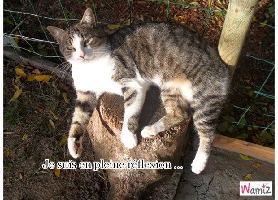 Tel Winnie l'Ourson ; Pense, pense, pense ..., lolcats réalisé sur Wamiz