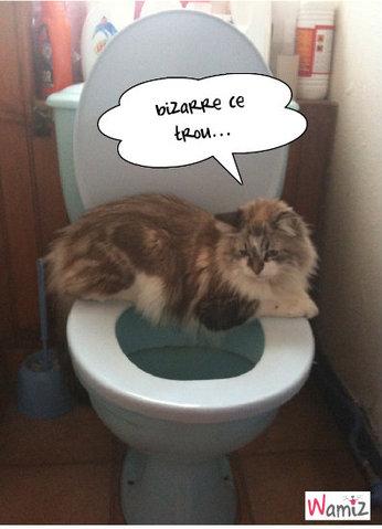Bijou aux toilettes, lolcats réalisé sur Wamiz