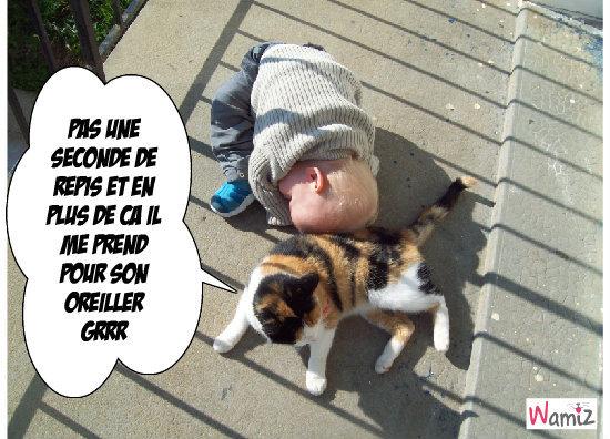 rien de tel qu'une bonne sieste sur un chat, lolcats réalisé sur Wamiz