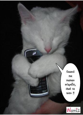Moi chat va !!, lolcats réalisé sur Wamiz