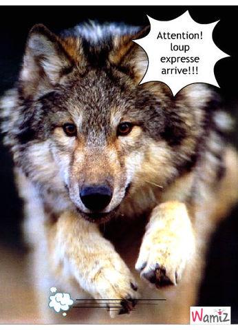 loup expresse, lolcats réalisé sur Wamiz