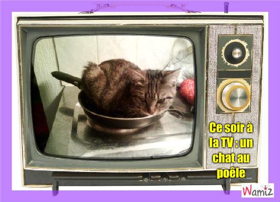 Un chat au poêle, lolcats réalisé sur Wamiz