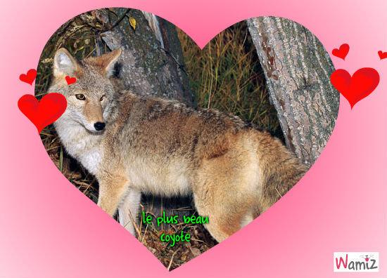le plus beau coyote, lolcats réalisé sur Wamiz