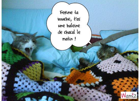 Morning !, lolcats réalisé sur Wamiz