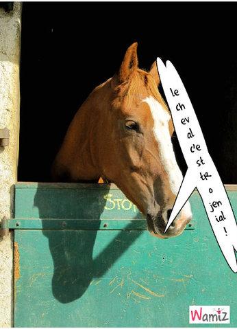 C'est  coule le  cheval!, lolcats réalisé sur Wamiz