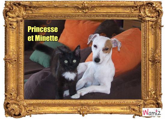 princesse et minette, lolcats réalisé sur Wamiz