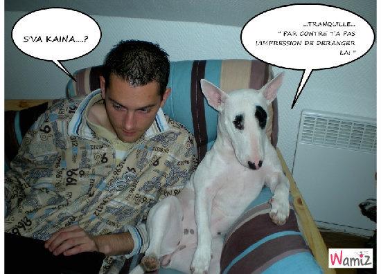 un chien et 3 coussins..., lolcats réalisé sur Wamiz