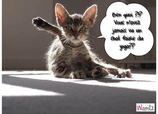 Yoga, lolcats réalisé sur Wamiz