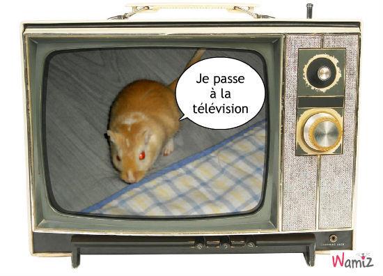 La télévision, lolcats réalisé sur Wamiz