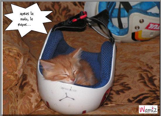 chaton dans le casque, lolcats réalisé sur Wamiz