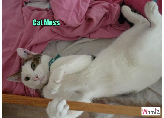 Cat Moss, lolcats réalisé sur Wamiz