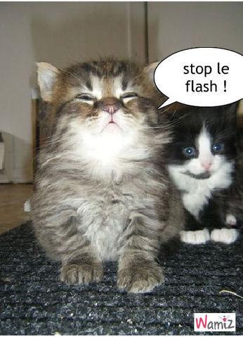 flash, lolcats réalisé sur Wamiz