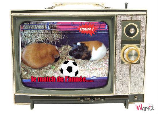 le foot chez les cochons...., lolcats réalisé sur Wamiz