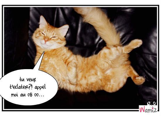 chat coquin, lolcats réalisé sur Wamiz