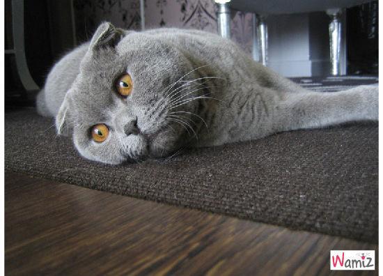 mon amour de chat, lolcats réalisé sur Wamiz