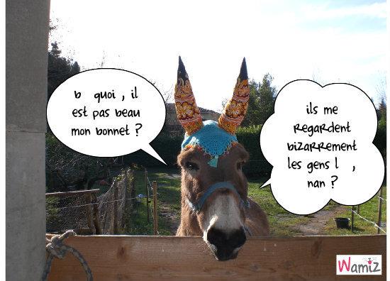 l'âne, lolcats réalisé sur Wamiz